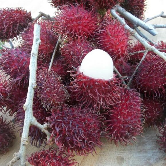 fruit ouvert gros plan