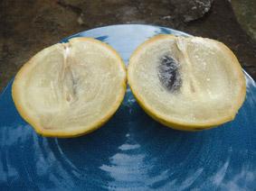 fruit ouvert