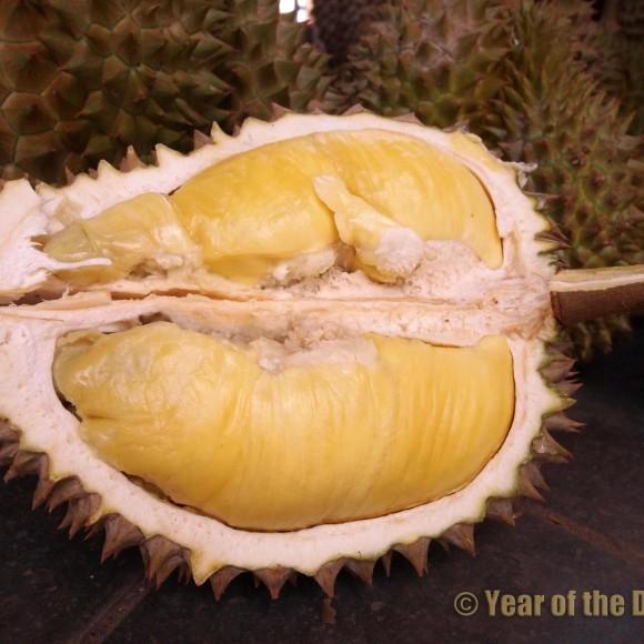 gros plan d'un fruit ouvert laissant apparaitre la chair crémeuse et onctueuse à souhait du bien nommé le roi des fruits!