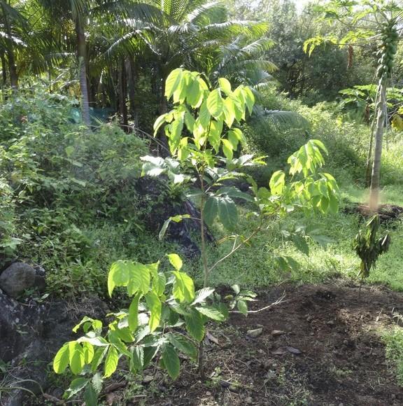 jeune arbre âgé de 3 ans