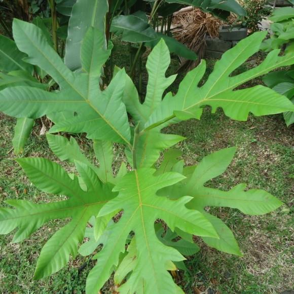 Jeune plant