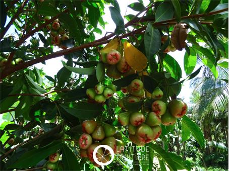 arbre en pleine fructification