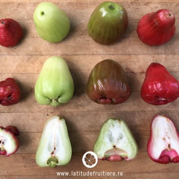 comparatif entre une variété locale (fruit de gauche) et 3 variétés de gros jamalac d'Indonésie (vert, rosé/vert et cloche rouge)